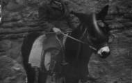 Foto de Ignacio Pascual con su burro en San Antón de Mayorga