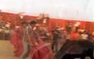Fiestas de Mayorga Ignacio Pascual dando un pase con el capote a una vaca 1982