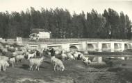 Puente viejo río Cea Mayorga