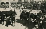 Ganado plaza toros Mayorga